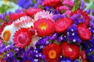 صوره اجمل صور ورد , اشكال متنوعة ومتميزة للازهار