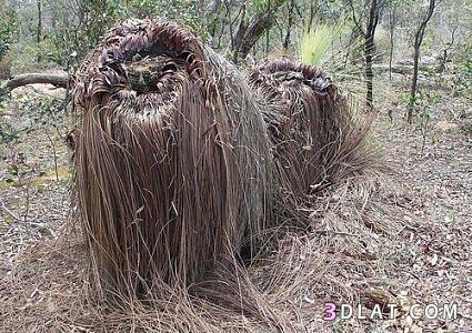 صورة اشجار غريبه سبحان الله , نباتات لم تشاهدها من قبل