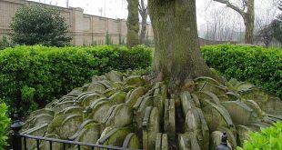 صوره اشجار غريبه سبحان الله , نباتات لم تشاهدها من قبل