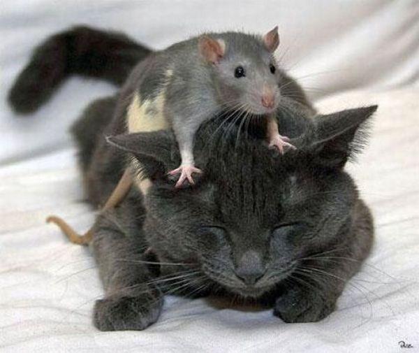 صوره اضحك مع الحيوانات , صور مثيرة ومذهلة