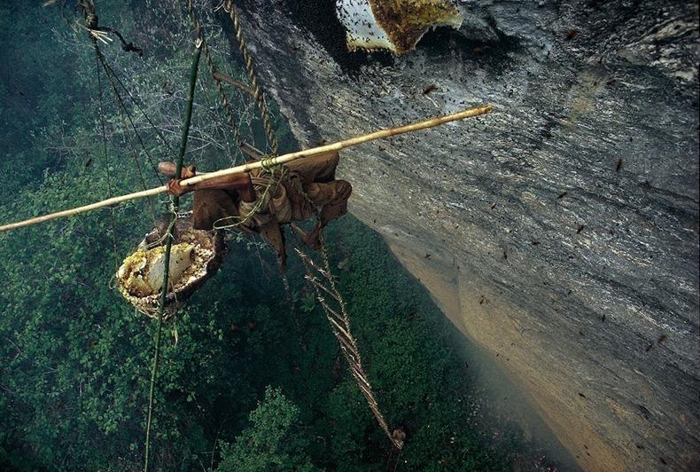 صوره طريق العسل في النيبال , عملية تحتاج لبراعة ومهارة
