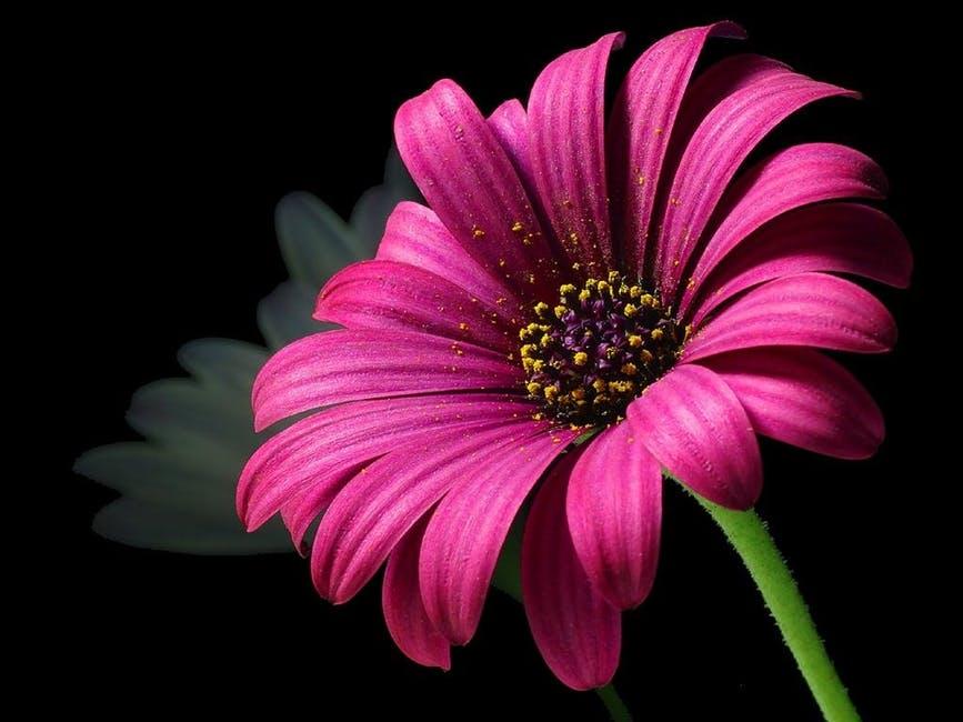 صوره خلفيات ورود منوعة , صور جذابة للزهور الملونة الرائعة