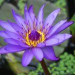 خلفيات ورود منوعة , صور جذابة للزهور الملونة الرائعة