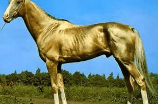 صورة اجمل خيول فى العالم , صور متنوعة من السلالات قد تبهرك لروعتها