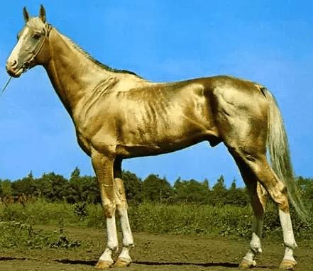 صور اجمل خيول فى العالم , صور متنوعة من السلالات قد تبهرك لروعتها