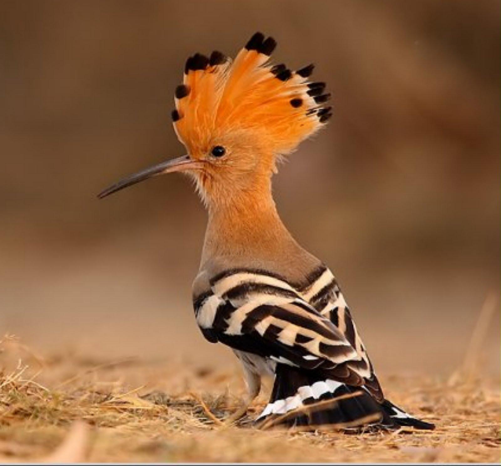 صورة صور الطيور واسمائها , مجموعة رائعة ومختلفة