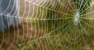 صور خيوط العنكبوت , نسيج مذهل يثبت عظمة الخالق سبحانة