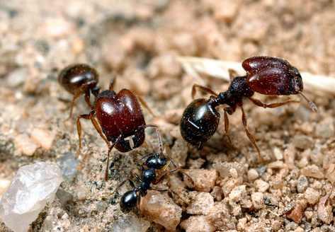صوره من عجائب النمل , صور مختلفة و غرائب مذهلة