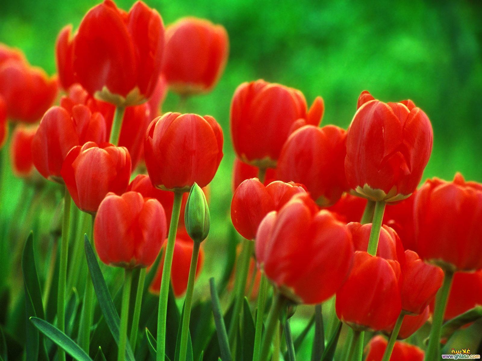 بالصور ورود من الطبيعة , اجمل صور لزهور جميلة 4493 9
