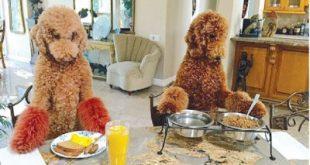 صوره كلاب اخر زمن , مهارات غريبة وعجيبة