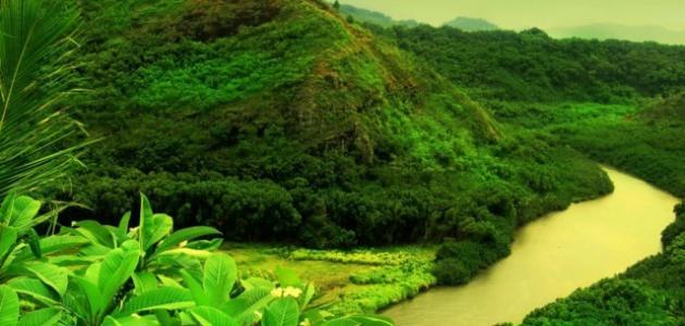 صوره روعة اللون الاخضر , صور نباتات متميزة تصلح خلفيات