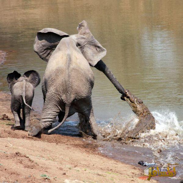 بالصور لقطات غريبة للحيوانات , صور متنوعة وعجيبة قد تذهلك 4580 10