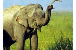 صورة لقطات غريبة للحيوانات , صور متنوعة وعجيبة قد تذهلك