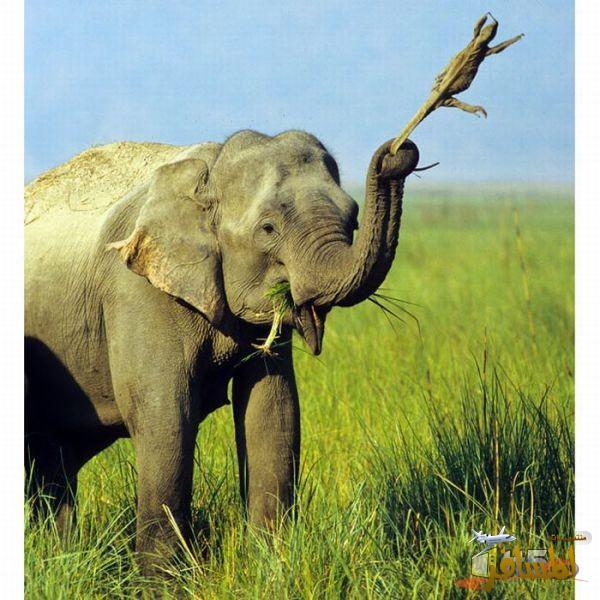صوره لقطات مضحكة للحيوانات , صور لحيوانات ظريفة