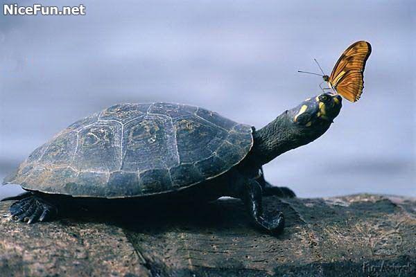 بالصور لقطات غريبة للحيوانات , صور متنوعة وعجيبة قد تذهلك 4580 2