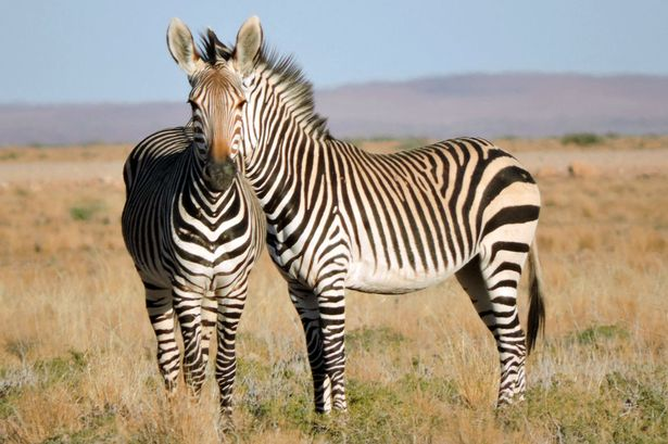 بالصور لقطات غريبة للحيوانات , صور متنوعة وعجيبة قد تذهلك 4580 8