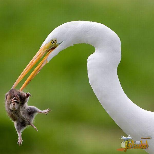بالصور لقطات غريبة للحيوانات , صور متنوعة وعجيبة قد تذهلك 4580 9