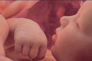 صوره جنين في بطن امه , مراحل تطور الجنين داخل بطن امه بالصور