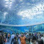 اكبر حوض سمك في العالم , اكبر حوض سمك يدخل موسوعه جينيس
