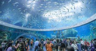 صوره اكبر حوض سمك في العالم , اكبر حوض سمك يدخل موسوعه جينيس