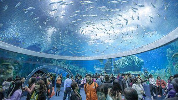 بالصور اكبر حوض اسماك في العالم , احلى انواع الاسماك 4730 12