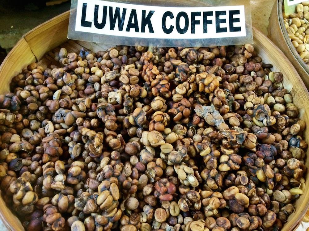 صورة اغلى قهوة في العالم , روث الفيلة من اغلى انواع القهوة في العالم