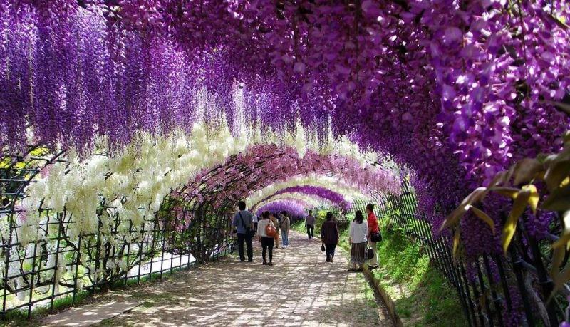 صوره حديقة الموف في اليابان , اماكن سياحيه جميله فى اليابان
