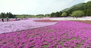 حديقة الموف في اليابان , اماكن سياحيه جميله فى اليابان