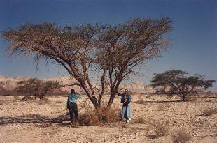 صورة شجرة الغرقد اليهودية , تعرف على شجره الغرقد واهميتها لدى اليهود