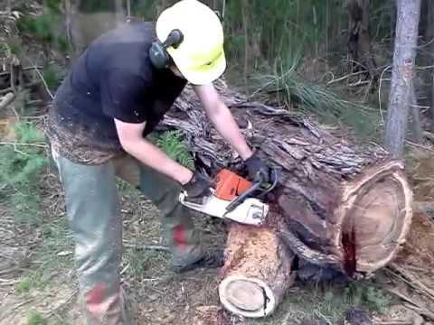 بالصور الشجرة التي تنزف دما , بالصور شجرة تنزف دما فى جنوب افريقيا 4960 14