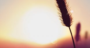 صوره اجمل خلفيات بلاك بيري , رمزيات موبايلات تهوس
