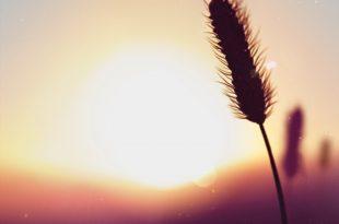 صورة اجمل خلفيات بلاك بيري , رمزيات موبايلات تهوس