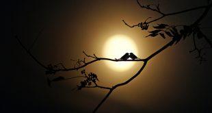 اجمل الصور الرومانسية للقمر , القمر في اجمل صوره