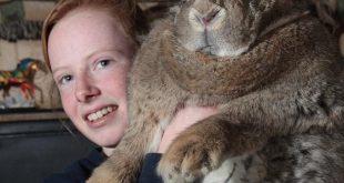 اكبر ارنب في العالم , اضخم الحيوانات فى العالم