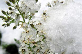 صوره جمال فصل الشتاء , روائح الشتاء