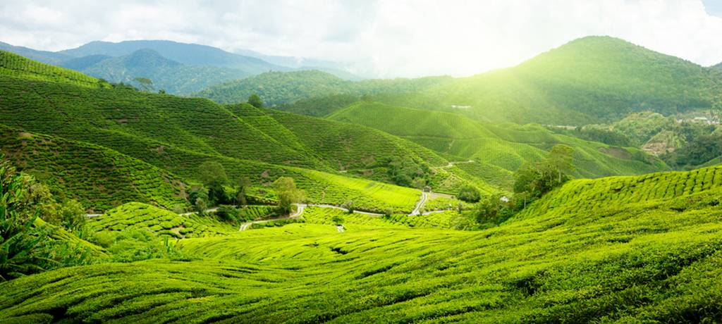 صوره مرتفعات الكاميرون في ماليزيا , اكبر المنتجعات الشاهقة في ماليزيا