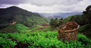 مرتفعات الكاميرون في ماليزيا , اكبر المنتجعات الشاهقة في ماليزيا