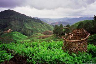 بالصور مرتفعات الكاميرون في ماليزيا , اكبر المنتجعات الشاهقة في ماليزيا 141 10 310x205