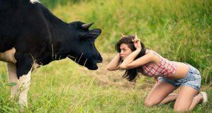 بالصور اقوى الصور المضحكة في العالم , اضحك مع افضل واجدد الصور 167 1.jpeg 310x165