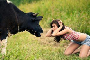 صور اقوى الصور المضحكة في العالم , اضحك مع افضل واجدد الصور