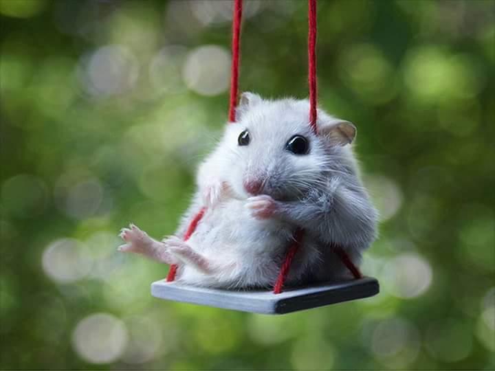 صورة اجمل الصور المضحكة للحيوانات , اضحك مع الحيوانات