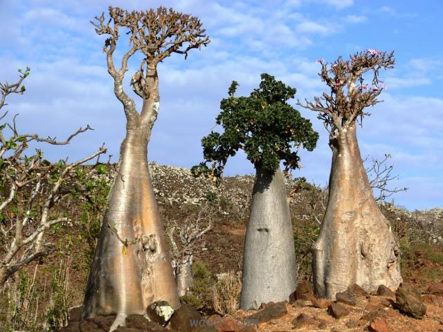 بالصور اغرب 10 اماكن على وجه الارض , اكثر المناطق غموضا في العالم 207 8