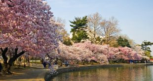 اليابان وما ادراك ما اليابان , صور لروعة الدولة اليابانية