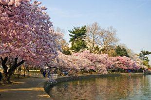 صور اليابان وما ادراك ما اليابان , صور لروعة الدولة اليابانية