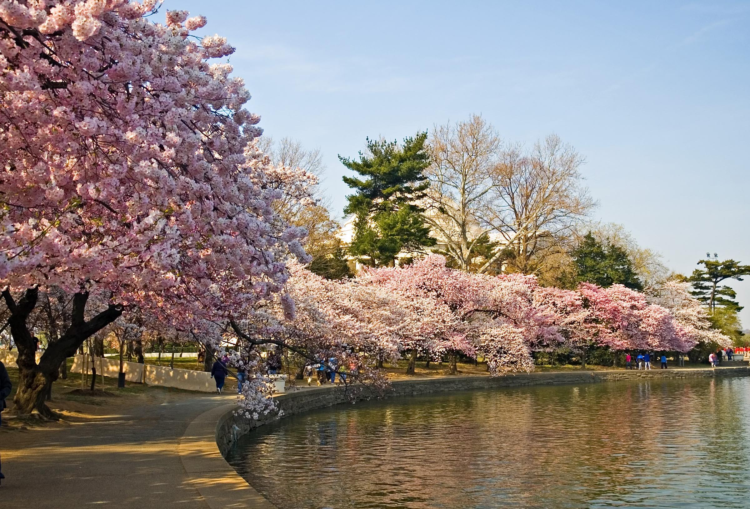 صورة اليابان وما ادراك ما اليابان , صور لروعة الدولة اليابانية