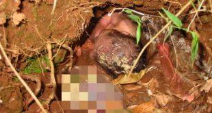 ولادة طفل داخل التراب بالصور , سبحان الله يخرج من الميت حي