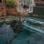 زجاج الموت في استراليا بالصور , مناظر مذهلة ومرعبة