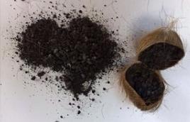 صورة استخراج المسك من الغزال بالصور , طرق علمية بسيطة ينتج افخر انواع العطور 309