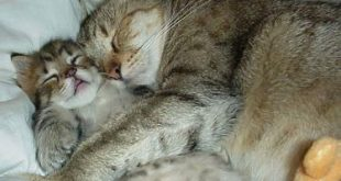 اجمل الصور المضحكه للحيوانات , لقطات تدخل السرور لقلبك
