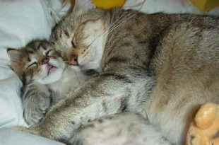صورة اجمل الصور المضحكه للحيوانات , لقطات تدخل السرور لقلبك